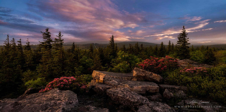 Dolly Sods Wilderness - West Virginia